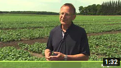 video thumbnail of How can striped and crucifer flea beetle feeding impact your crop?