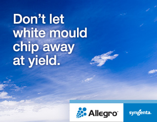 Dont let white mould chip away at yield