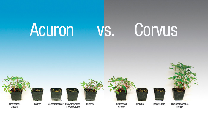 More of the modes of action in Acuron fully provided control of waterhemp, while only one of the modes of action in Corvus provided effective control